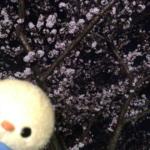 佐保川の桜とぴよっきー