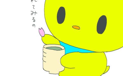 ぴよ お茶に桜を入れてみる